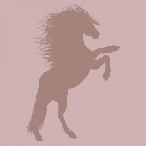 Hästsport